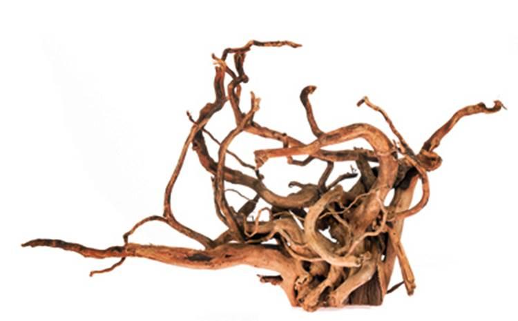 Branchwood