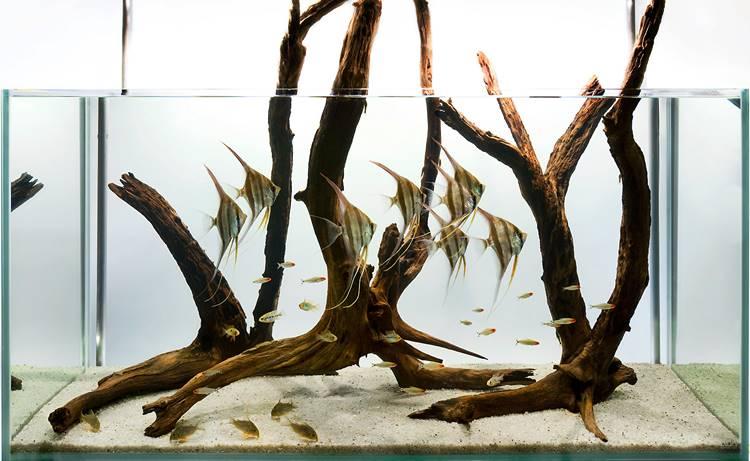 Hardscape Ikan Manfish