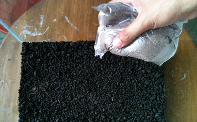 Panduan Memilih Substrate Dalam Aquascape