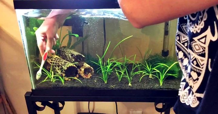 cara membersihkan akuarium kotor