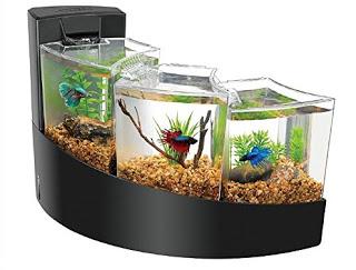 Cara Mempercantik Akuarium Kecil Para Pecinta Ikan Hias Memilih Akuarium Kecil Biasanya Karena Alasan Keterbatasan Ruang Tempat Di Rumah Atau Bisa Juga Di Kantor Tempat Anda Bekerja Mungkin Ada Yang Berfikir