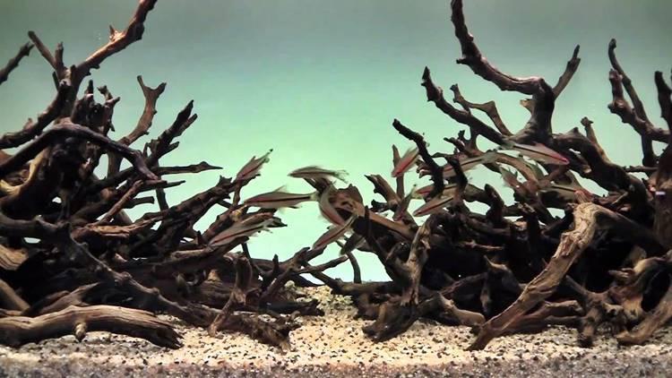 Hardscape Aquarium Design